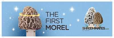 Picture of The First Morel II Bumper Sticker