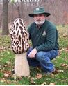 Picture of Giant Morel